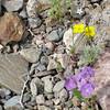 Rock garden in Death Valley National Park