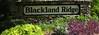 Blackland Ridge-Marietta (3)
