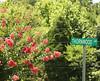 Briarwood Marietta GA (2)