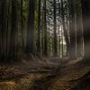 Roy's Redwoods