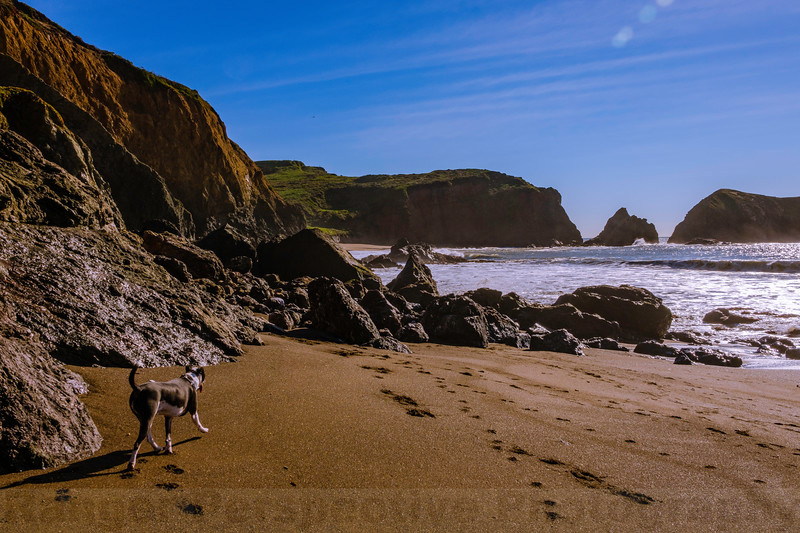Puppy Photo-bomb at Rodeo Beach
