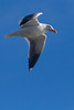 Seagull9932