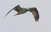 MIJ-L-WATERBIRDS-0122-14