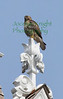 MIJ-L-WATERBIRDS-0122-03
