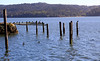 Cormorants, pelicans and ducks rest on old pilings on Tomales Bay, looking southwest from Tony's Seafood restaurant one mile south of Marshall, Calif. on Friday, April 20, 2012.(Special to the IJ/Jocelyn Knight)