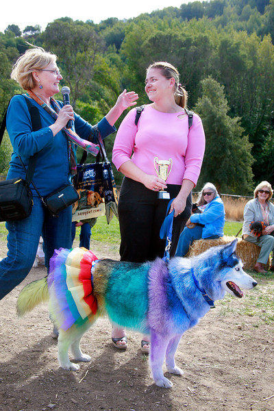 First prize winner for best costume Sky a siberian husky dressed as Rainbow Bright and her owner Annie Castellon receive congratulations from Novato Mayor pro tem Pat Eklund at the Dogbone Meadow fundraiser BarkFest in Novato, Calif. Saturday, October 21, 2012. (Special to the IJ/James Cacciatore)
