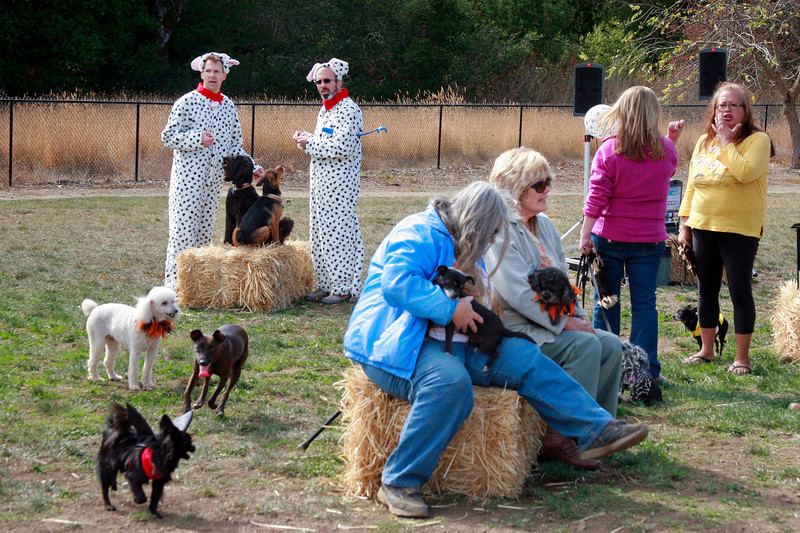 Dogs and their humans attend the Dogbone Meadow fundraiser BarkFest to help fund the Novato dog park in Novato, Calif. Saturday, October 21, 2012. (Special to the IJ/James Cacciatore)