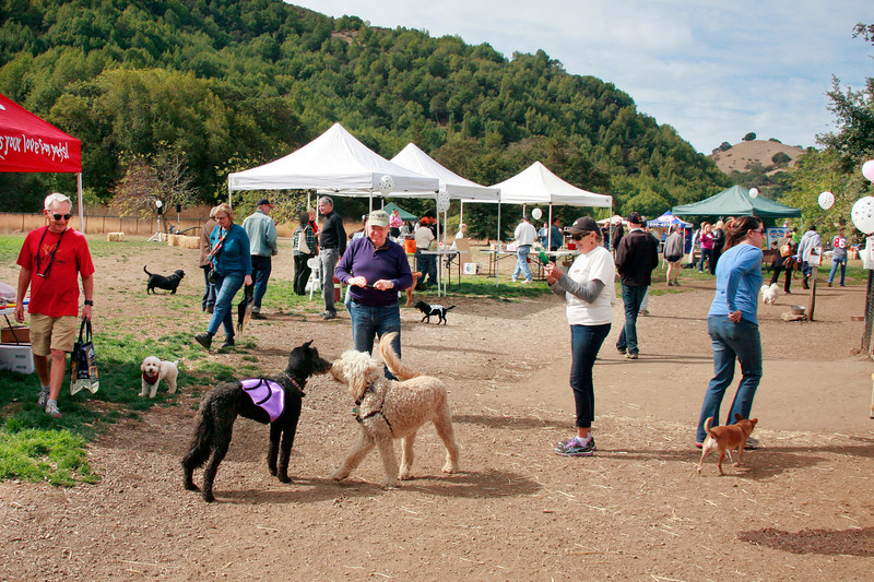 Dogs and their humans attend the Dogbone Meadow fundraiser BarkFest to help fund the maintenance of the Novato dog park in Novato, Calif. Saturday, October 21, 2012. (Special to the IJ/James Cacciatore)