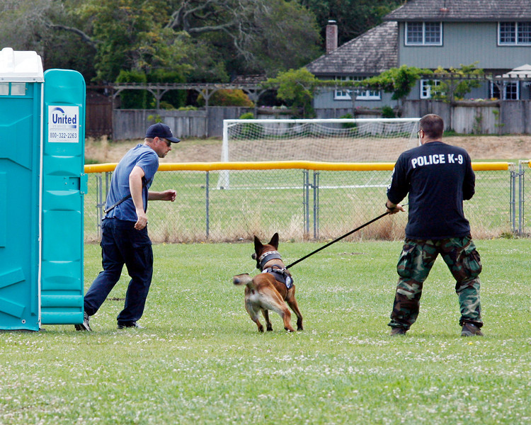 Novato Police dog Metz finds officer Kevin Naugle, left, in an out house and gives chase while his handler officer Jeff Ames gives commands and restrains him during a training class at Novato High School in Novato, Calif. Wednesday, July 18, 2012.(Special to the IJ/James Cacciatore)