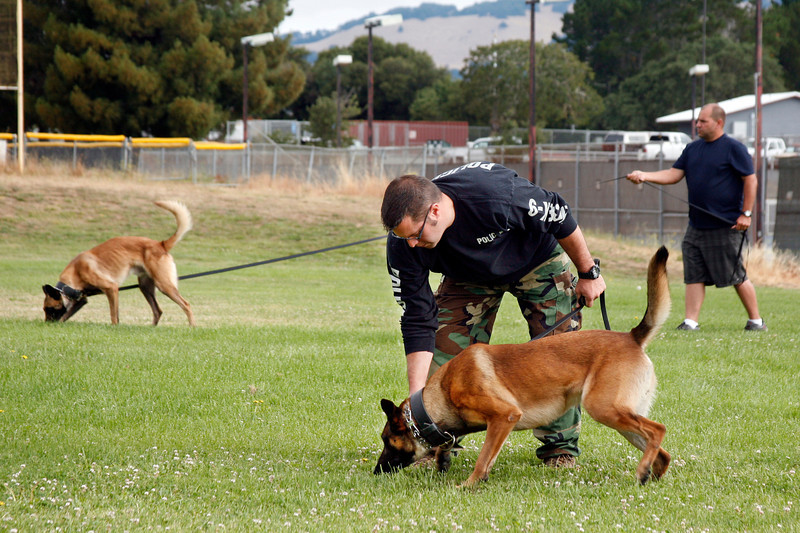 Novato Police officer Jeff Ames and his dog Metz practices scent tracking during a training class at Novato High School in Novato, Calif. Wednesday, July 18, 2012.(Special to the IJ/James Cacciatore)