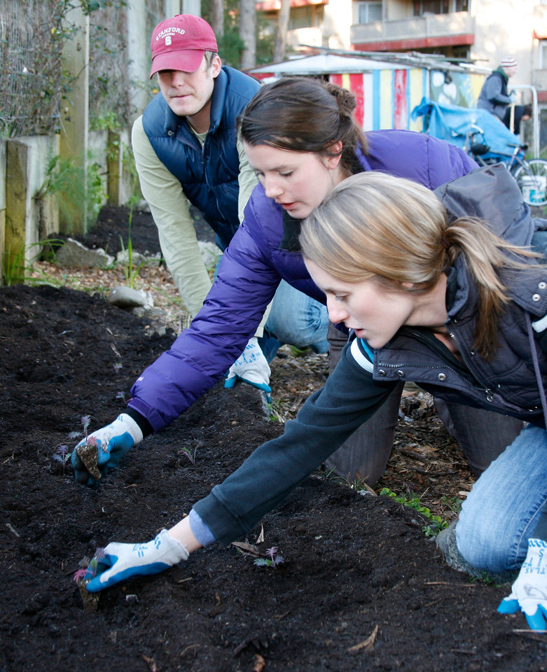 Sisters Kelsey, right, and Caitlin Becchelli along with Cody Karutz, left, plant kale as participants of Martin Luther King Day work crew at the community garden on Cole Drive in Marin City, Calif. on Monday, January 16, 2012.  (Special to the IJ/James Cacciatore Photo)