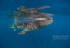 whale shark reflections