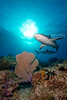 Reef sharks on patrol