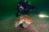 Rebreather diver and a green turtle