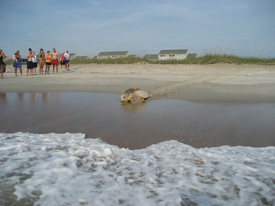 July 12th 2010 Nesting Loggerhead