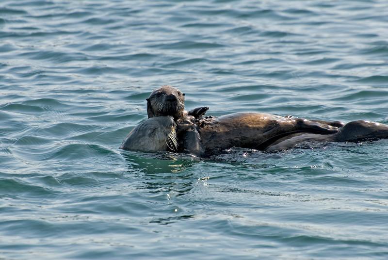 Sea Otter & Pup
