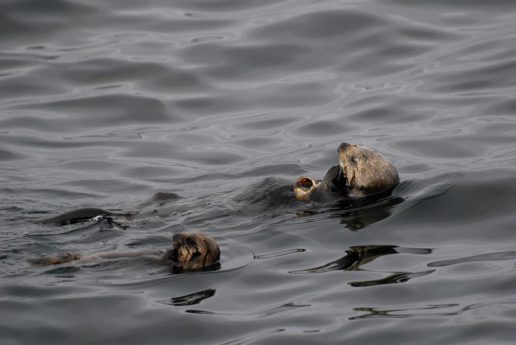 Sea Otter Mom and Pup