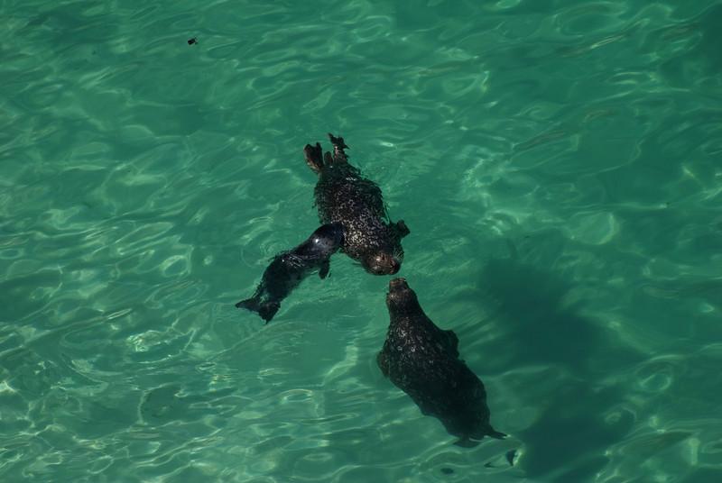 Harbor Seals & Pup