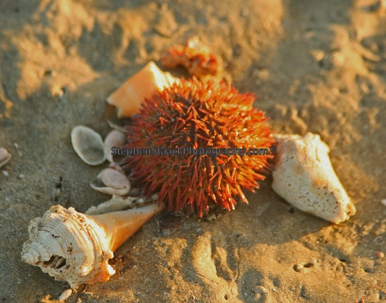 shells  and a sea urchin