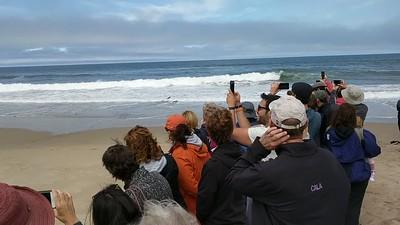 Marine Mammal Release 20180714