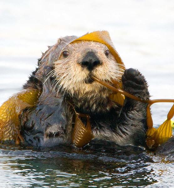 Enjoying Kelp