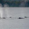 Cavalcade of Whales II