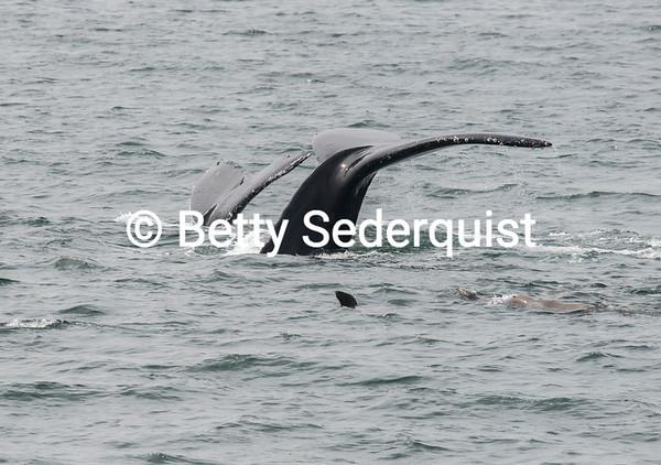 Synchronized Whale Flukes