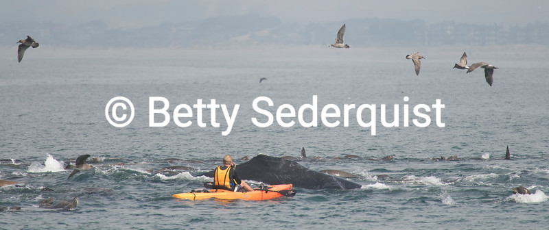 Kayaker and Whale, Monterey Bay