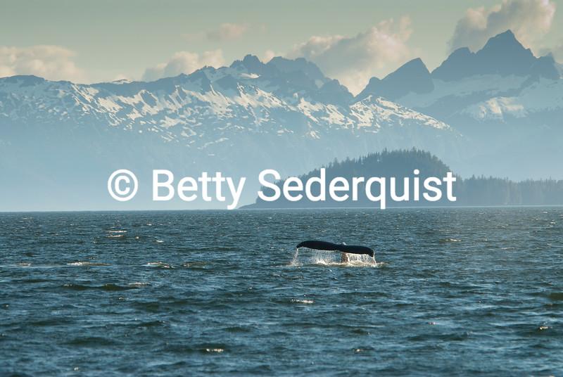 Whale Fluke and Baranof Island, Alaska