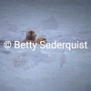 Sea Otter and Painterly Effects