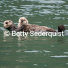Sea Otter and Pup, Dundas Bay