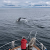 Photographer and Fluking Humpback Whale