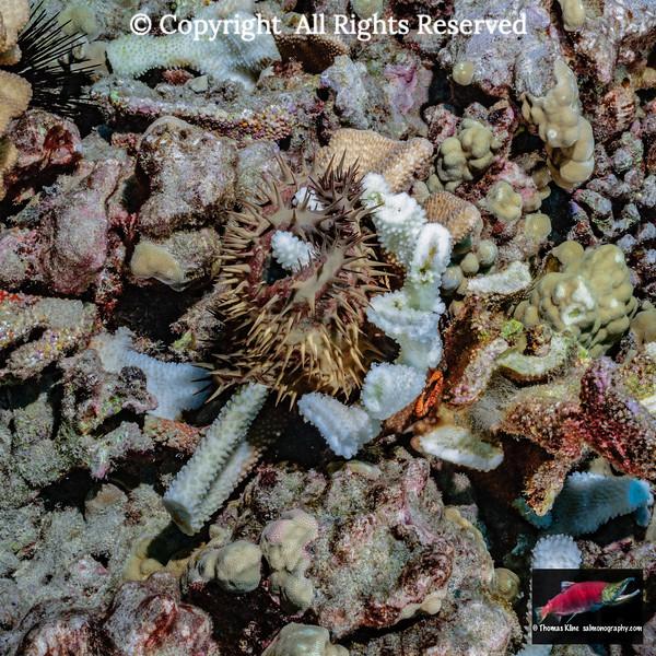 Predation on coral