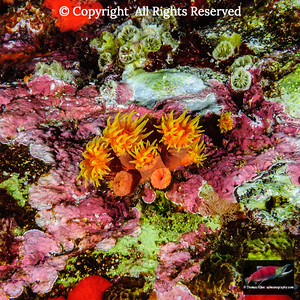 Corals: reef building corals and polyp life forms of the Cnidaria