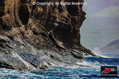 Molokini backwall limpet habitat