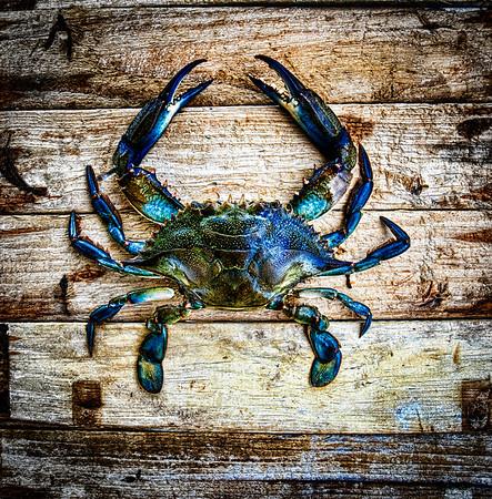 Blue Crab fine art photography