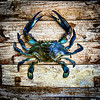 Blue Crab fine art photography