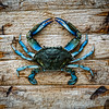 Topsail Island Photographs of Blue Crab