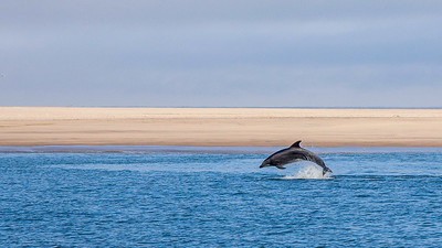 Dolphin in Walvis Bay