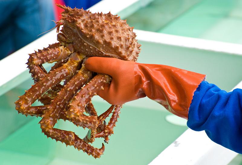Lobster Fishing aboard the Aleutian Ballad