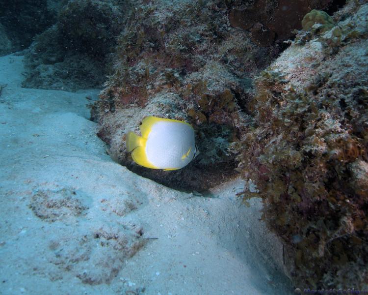 Belize-Dec13-Butterfly-4