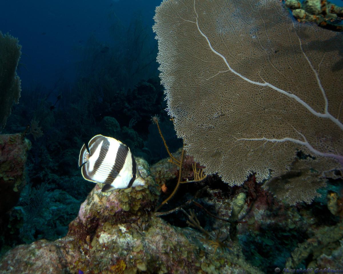 Belize-Dec13-Butterfly-2