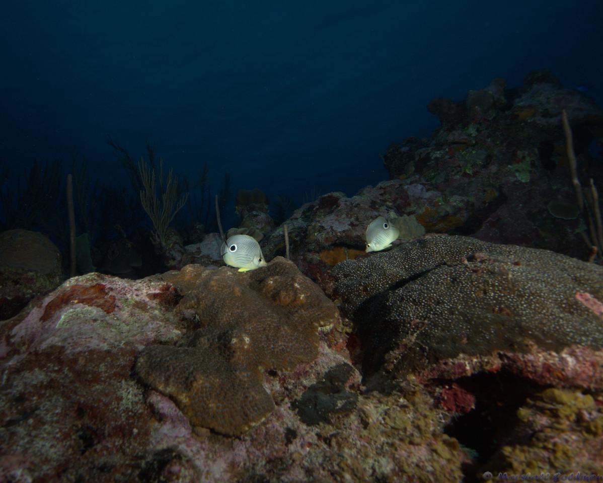 Belize-Dec13-Butterfly-7