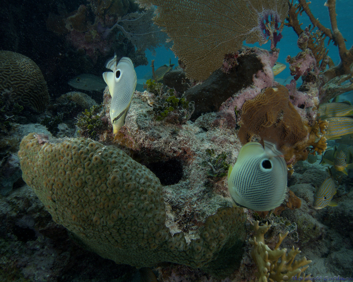 Belize-Dec13-Butterfly-6