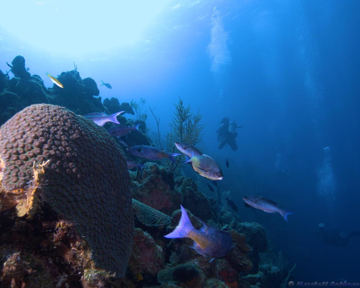 Belize-Dec13-Parrotfish-13