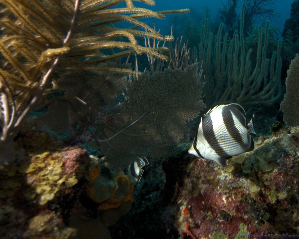 Belize-Dec13-Butterfly-1