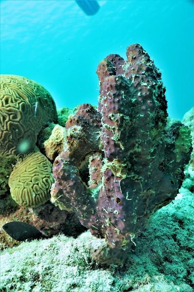 Bonaire-2018-Critters-Sponges-DSCI1689 (2)