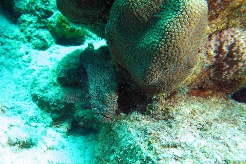 Bonaire-2018-Critters-Graysby-DSCI1260
