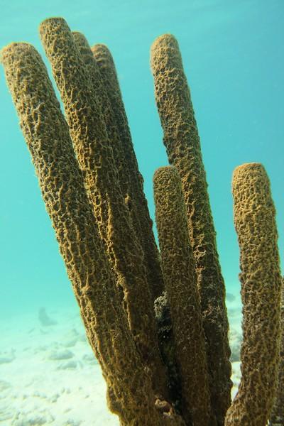 Bonaire-22018-Critters-Sponges-DSCI1463