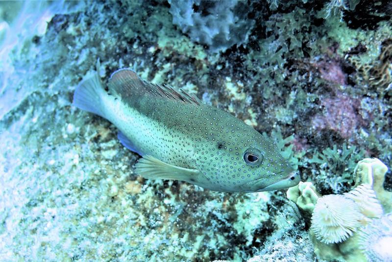 Bonaire-2018-Critters-Coney-DSCI1369